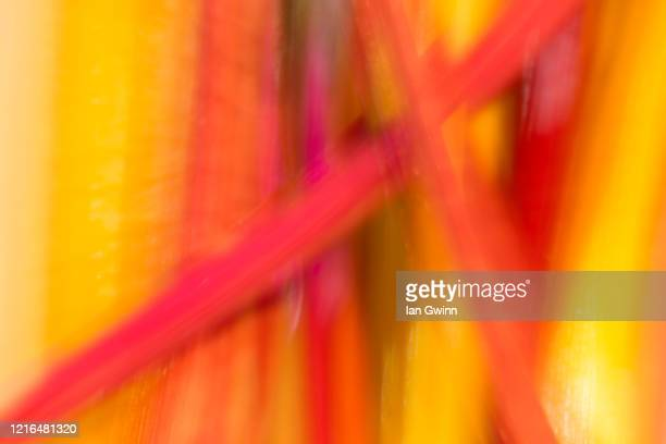 rainbow swiss chard abstract_2 - ian gwinn - fotografias e filmes do acervo
