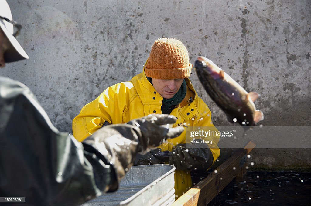 Rainbow Trout Farmer Robert Judd Right And His Business Partner News Photo Getty Images