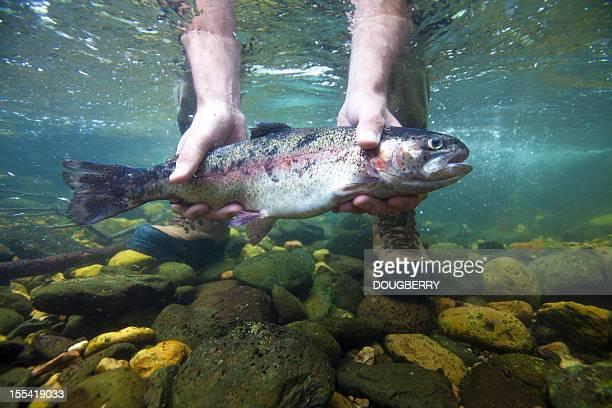 Trucha arco iris submarino