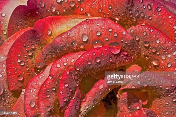 Raindrop Morning