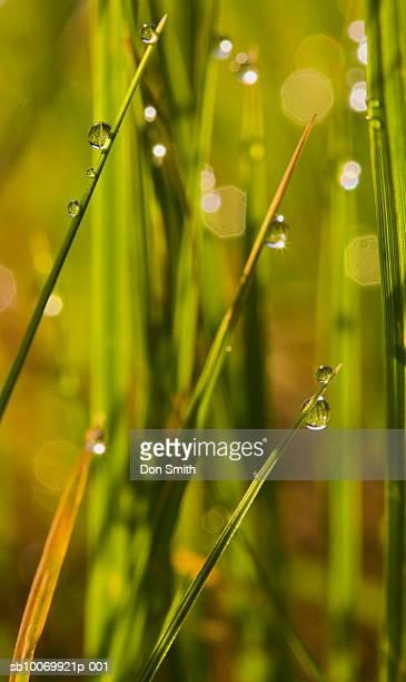 raindrops on grass, close-up - don smith imagens e fotografias de stock