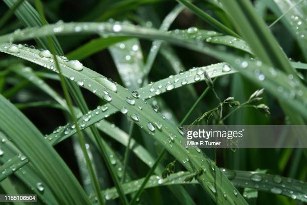 raindrops on green grass - purity stock pictures, royalty-free photos & images