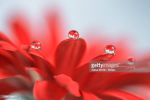 Raindrops on red flower