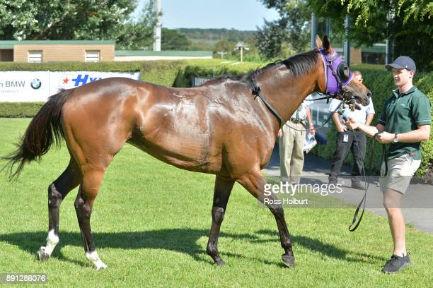 Raindrops On Roses after winning the Highview Accounting Mornington Hcp at Mornington Racecourse on December 13 2017 in Mornington Australia