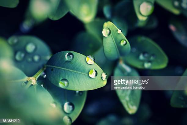 raindrops on the green leaf closeup