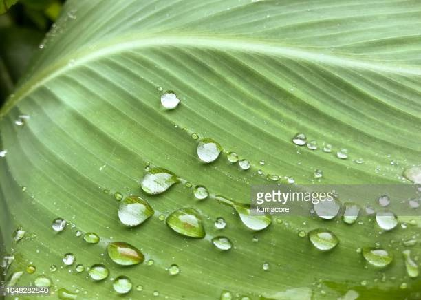 raindrops on the green leaf - dew stock photos and pictures