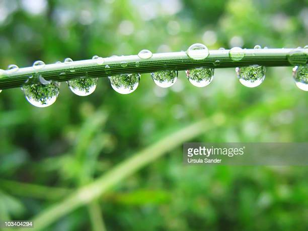 Raindrops with the Refraction of a Green Jungle