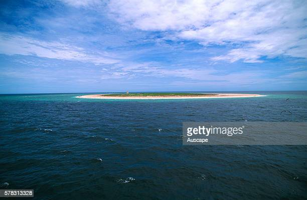 Raine Island, a scientific National Park of 32 ha, an environmental icon off limits to the public, It is the world's largest and most important Green...