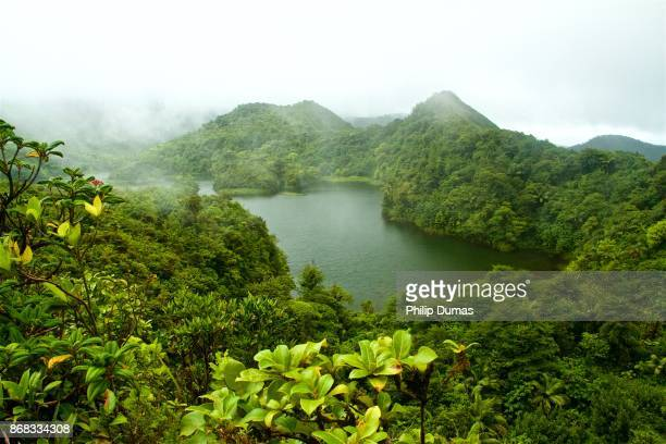 rainforest and freshwater lake - dominica stock pictures, royalty-free photos & images