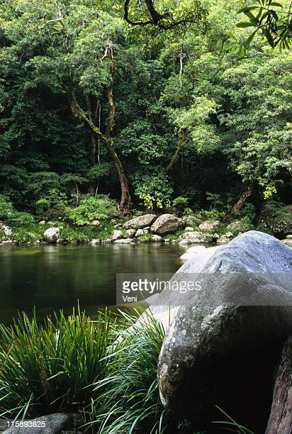 rainforest and river, mossman gorge, australia - unesco stock pictures, royalty-free photos & images