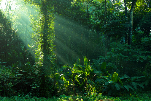 rainforest and sunbeam at morning 1012436578