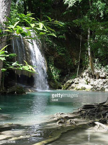 rainforest and waterfall
