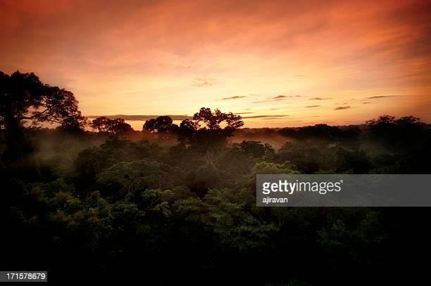 selva tropical al amanecer - paisajes de peru fotografías e imágenes de stock