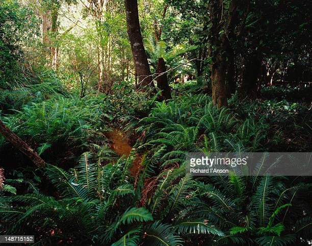 Rainforest at Lilly Pilly Gully, Wilsons Promontory National Park.