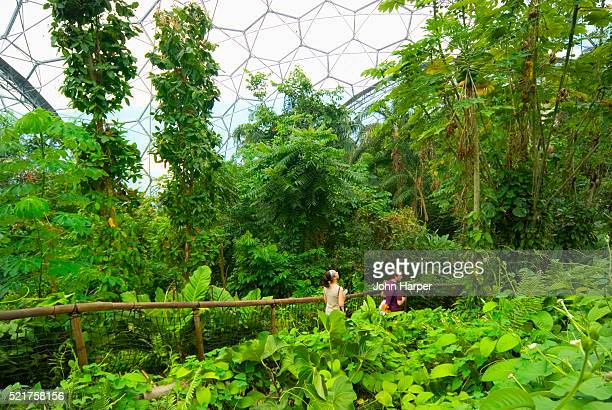 Rainforest Biome Conservatory at Eden Project