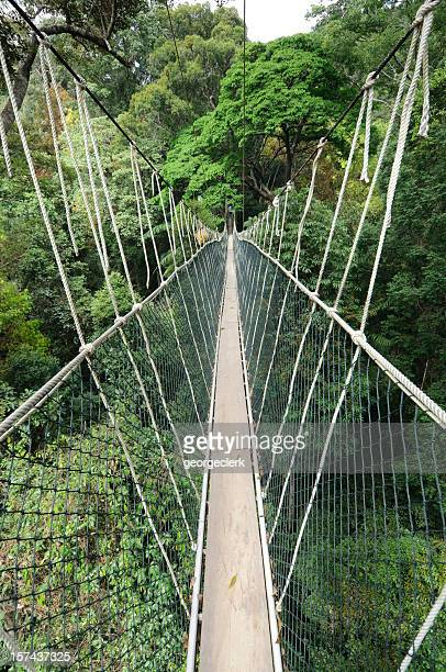 rainforest canopy walkway - treetop stock photos and pictures