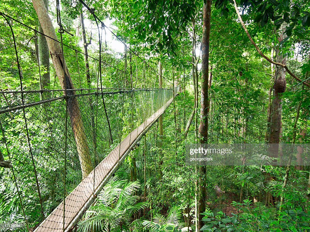 Rainforest Canopy Walkway & Taman Negara National Park Stock Photos and Pictures | Getty Images