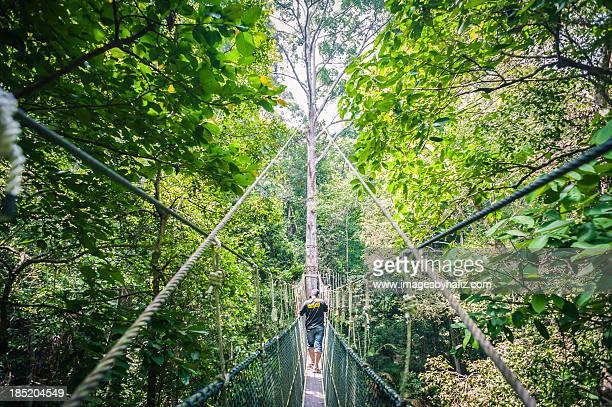 rainforest canopy walkway - taman negara national park stock photos and pictures