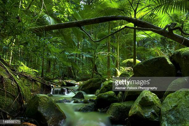Rainforest canopy with stream in Daintree