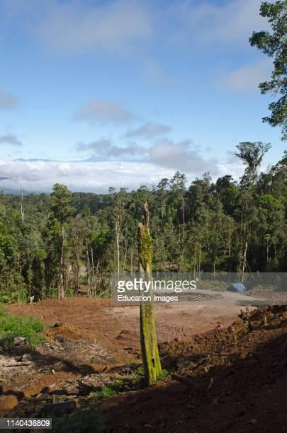 Rainforest clear-cut logging near Tari, Papua New Guinea.