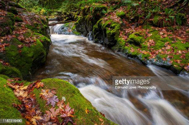rainforest creek during the autumnal season. - nunavut stock pictures, royalty-free photos & images