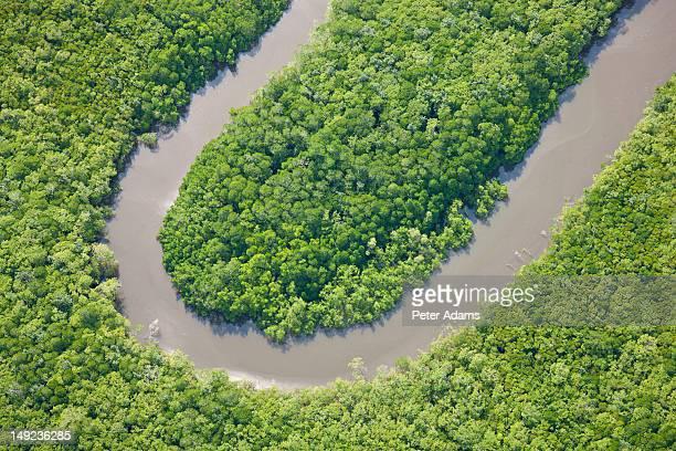 Rainforest, Daintree River, National Park