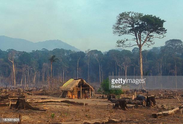 floresta tropical destruição - destruição - fotografias e filmes do acervo