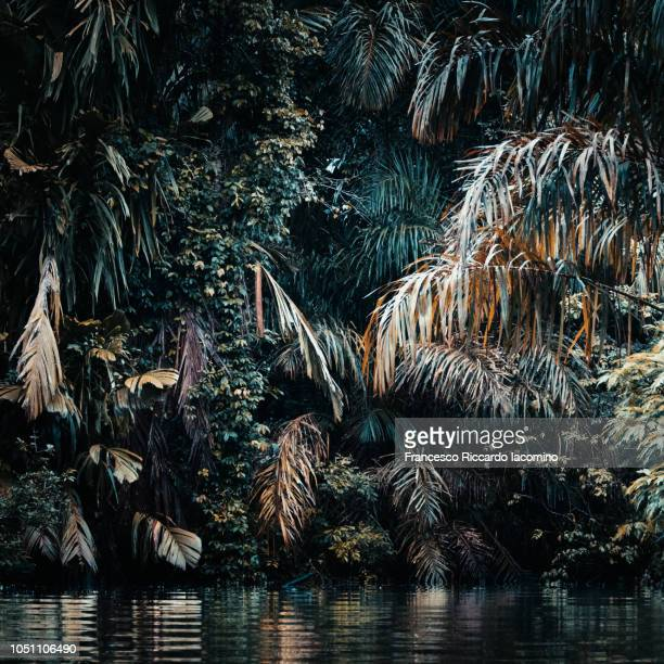 Rainforest Fine Art