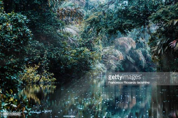 rainforest fine art - iacomino costa rica foto e immagini stock