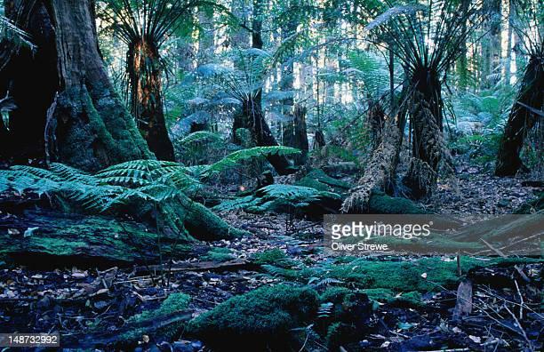 Rainforest floor.