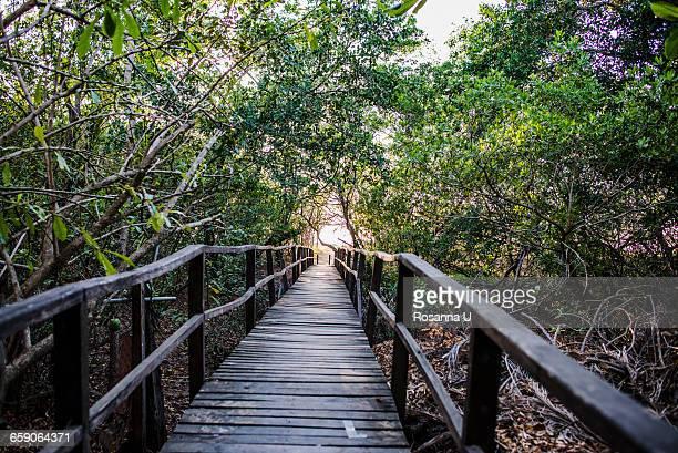 Rainforest footbridge to Tamarindo beach, Guanacaste, Costa Rica