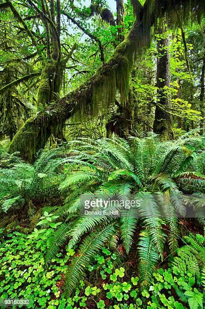 rainforest greenery - foresta temperata foto e immagini stock