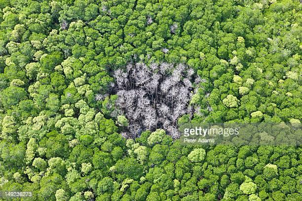 Rainforest Hit By Lightning, Daintree Forest
