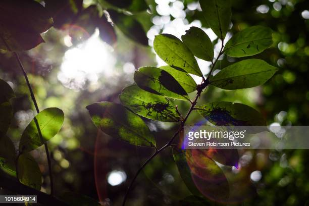 rainforest in sunlight - photosynthesis stock photos and pictures