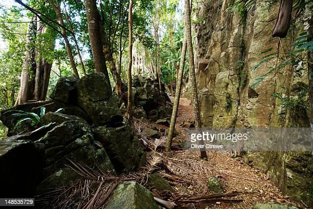 Rainforest in the Tamborine Mountains.
