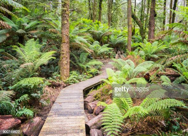 rainforest jungle track, nature background, rich lush colors - fern stock pictures, royalty-free photos & images