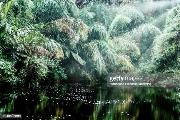 rainforest, lush foliage and light beam. costa rica - iacomino costa rica foto e immagini stock