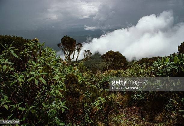 Rainforest Mount Nyiragongo Virunga National Park Democratic Republic of the Congo