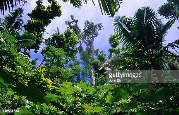 rainforest on big tree trail in el yunque. - paisajes de puerto rico fotografías e imágenes de stock