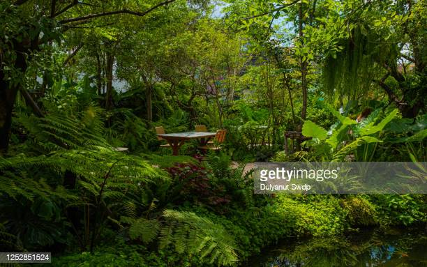 rainforest - tropical climate stock pictures, royalty-free photos & images