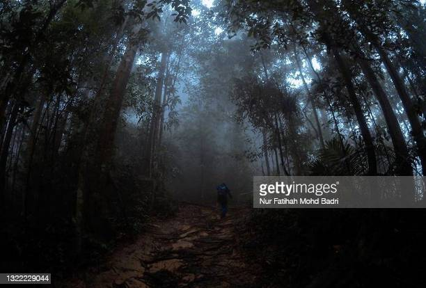 morning pathway rainforest with fog