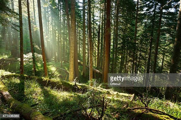 Floresta pluvial