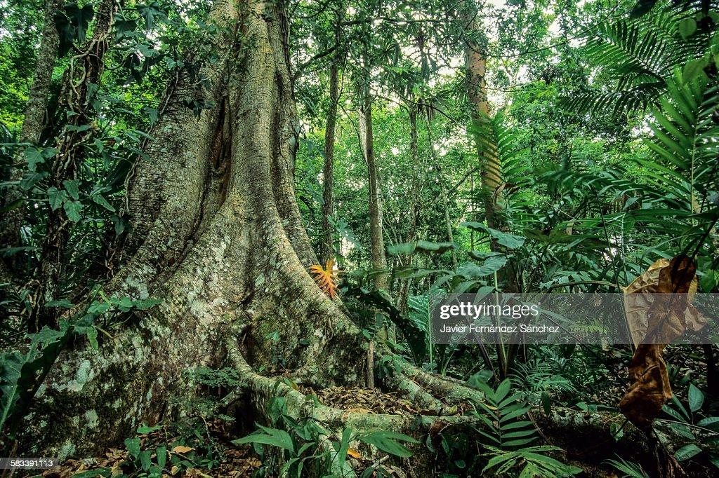 Rainforest. : Stock Photo