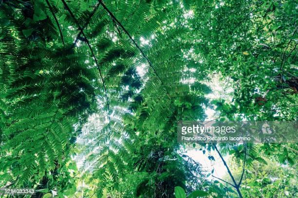 rainforest, plants and lush foliage - iacomino costa rica foto e immagini stock