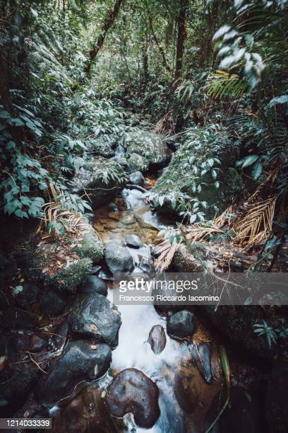 rainforest, plants and lush foliage, river on foreground - iacomino costa rica foto e immagini stock