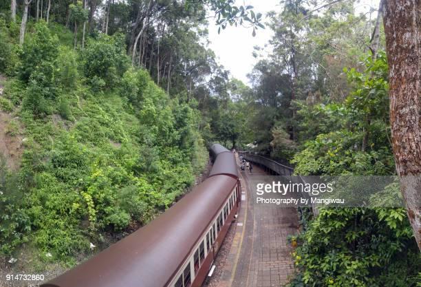 Rainforest Railroad Station