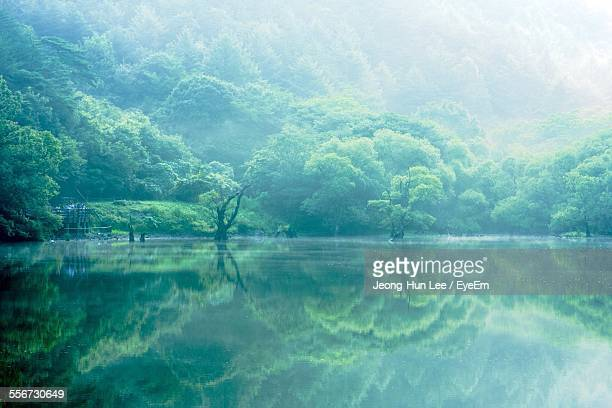 rainforest reflecting in lake - daegu stock pictures, royalty-free photos & images