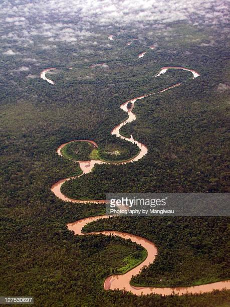 rainforest river - llanura costera fotografías e imágenes de stock