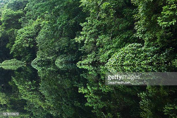 rainforest river with reflections in the water gabon africa - gabon stock pictures, royalty-free photos & images