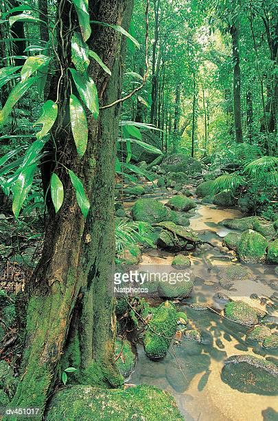 Rainforest Stream, Mossman Gorge, Daintree National Park, Queensland, Australia